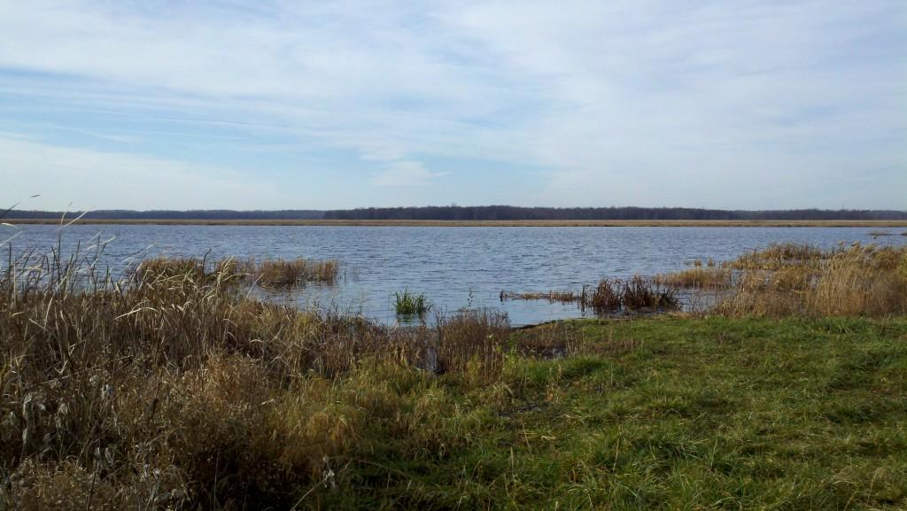 Marshland Habitat