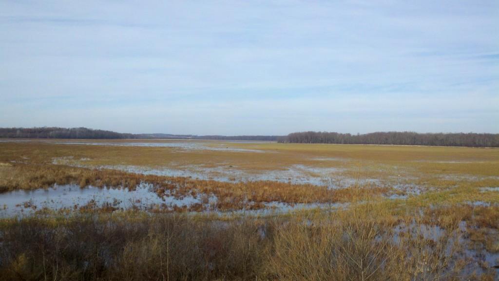 View across Montezuma Swamp