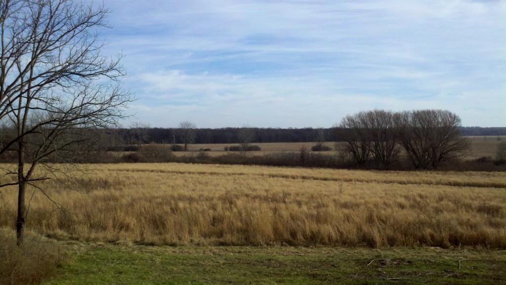 Grasslands and island