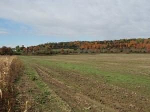 Looking across a field toward Flint Mine Hill